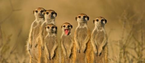 meercats_social_media_listening_960x420